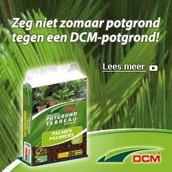 DCM BANNER