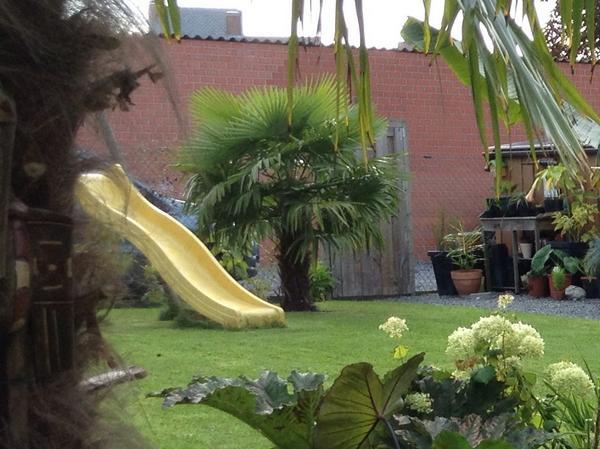 "Jardin ""La Palmeraie"" à Renaix (B) File"