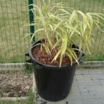 palm-verplanten-8