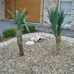 yucca-gloriosa-200907