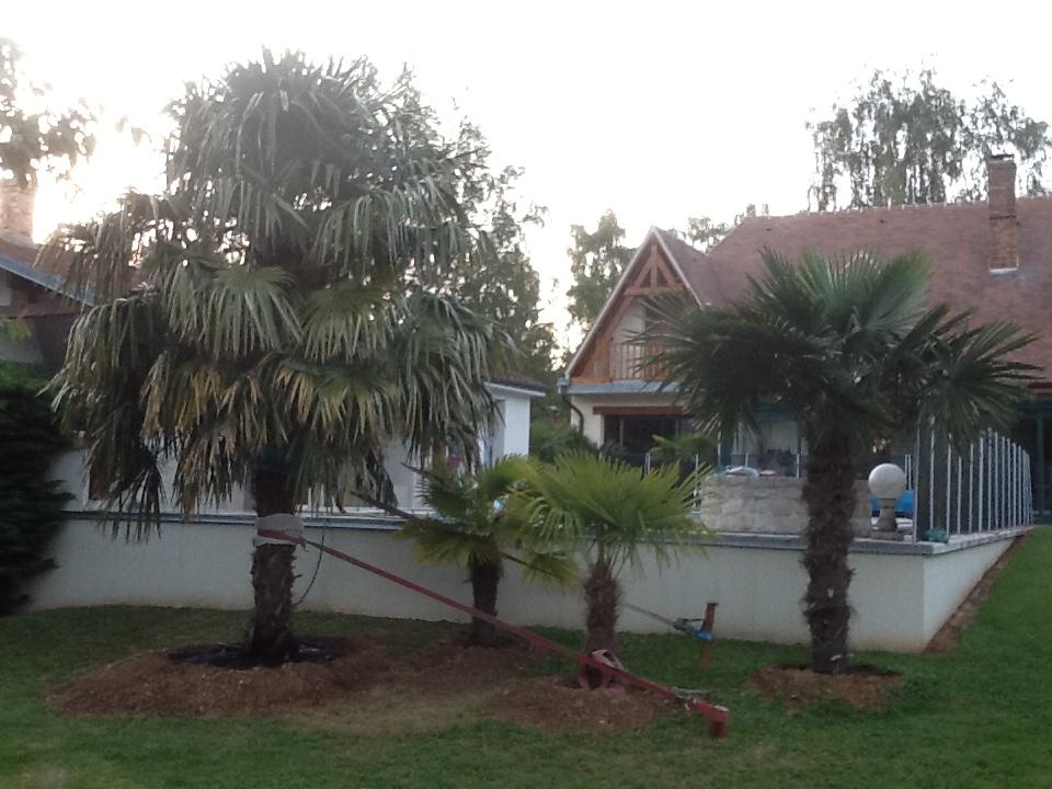transplantation dun palmier lexp233rience dun de nos