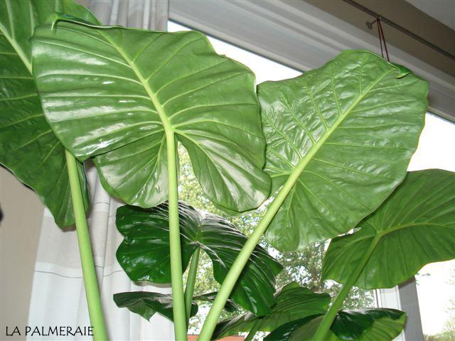 sterke potplanten voor buiten