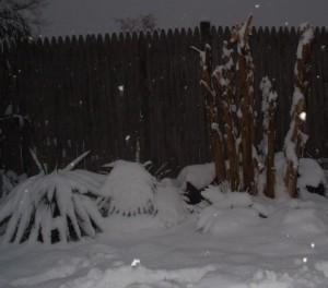 winterbescherming0
