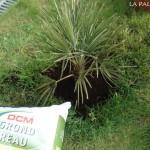 Aanplant palm 5b
