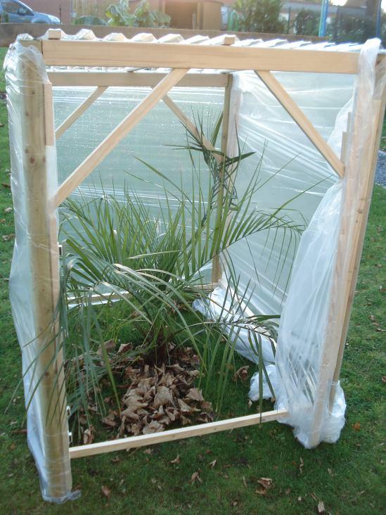 plan de construction pour l abri hivernal d un palmier