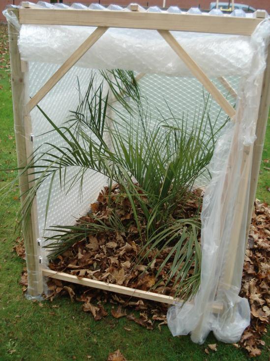 Plan de construction pour l abri hivernal d un palmier hivernage palmier la palmeraie fr - Hivernage d un citronnier ...