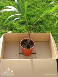 Comment envoyer une plante par la poste la palmeraie fr - Quand planter un bananier ...