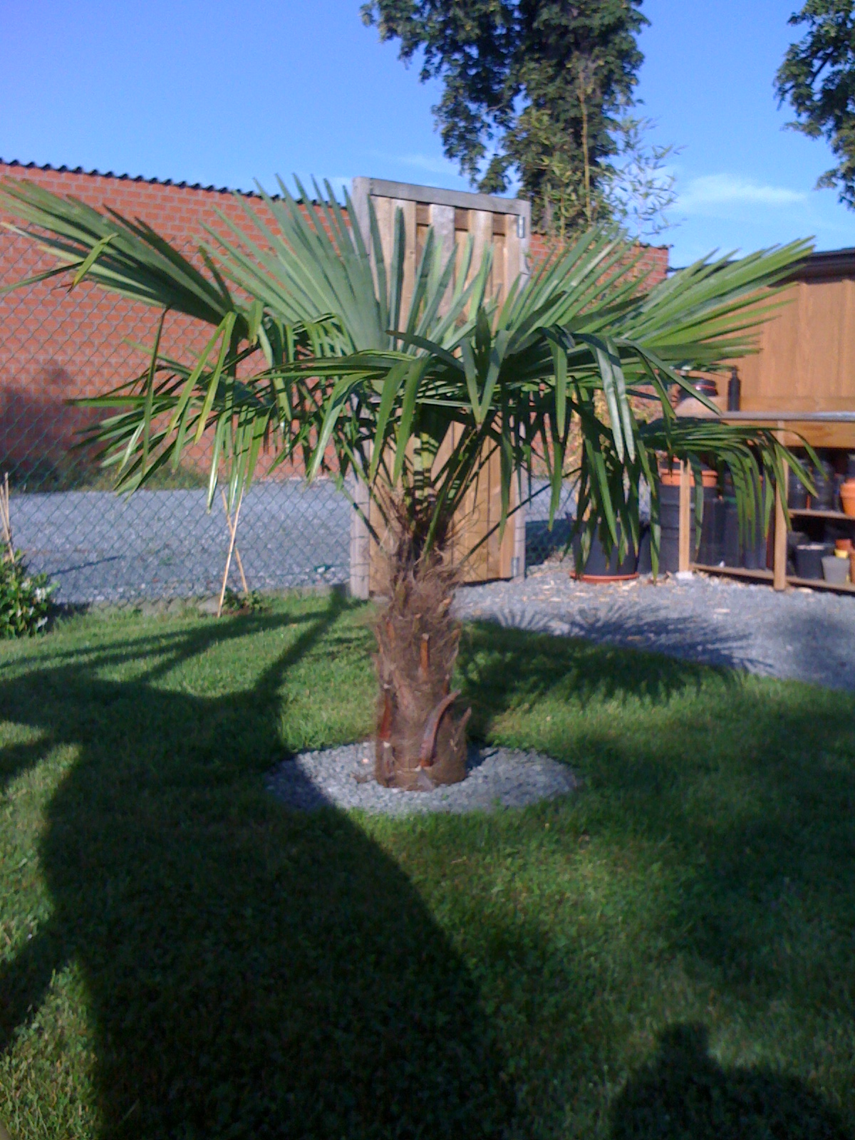 la collection de palmiers de la palmeraie la palmeraie fr