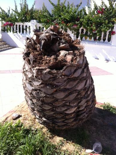 La lutte contre les ravageurs le papillon et le scarab e des palmiers la palmeraie fr - Quand tailler un palmier ...