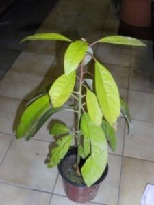 De plant kan er na 1 jaar zo perfect uitzien.