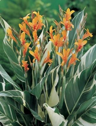 Canna 39 stuttgart 39 palmvrienden wiki for Habitat stuttgart